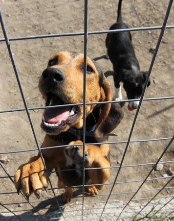 Breeding Of Dogs Act  Summary