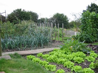 allotment-plot