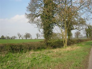 Hedgerow alongside fields