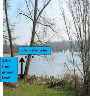 notice is not required for trees with a stem diameter under 7.5cm when measured at 1.5m above the ground