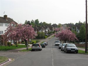 a street lined with trees with pink blossom